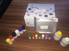淀粉样蛋白试剂盒