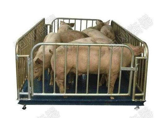 动物畜牧秤