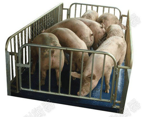 称猪电子秤