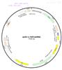 P1921pLKO.1-DDit3shRNA1人源基因干扰质粒